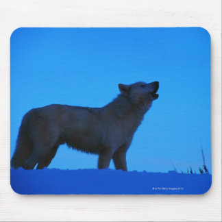 Photo, white wolf howling at night, Color, High Mouse Pad
