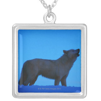 Photo, white wolf howling at night, Color, High Silver Plated Necklace