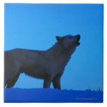 Photo, white wolf howling at night, Color, High Large Square Tile