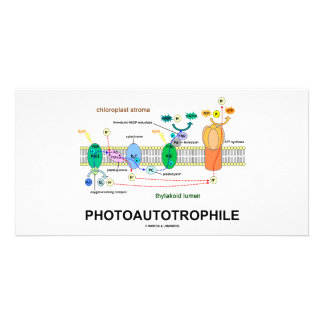 Photoautotrophile Photosynthesis Photo Card Template