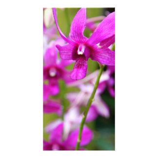 Photocard - Cooktown Orchid Card
