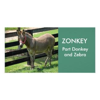 Photocard del burro y de la cebra de la pieza de tarjetas personales con fotos