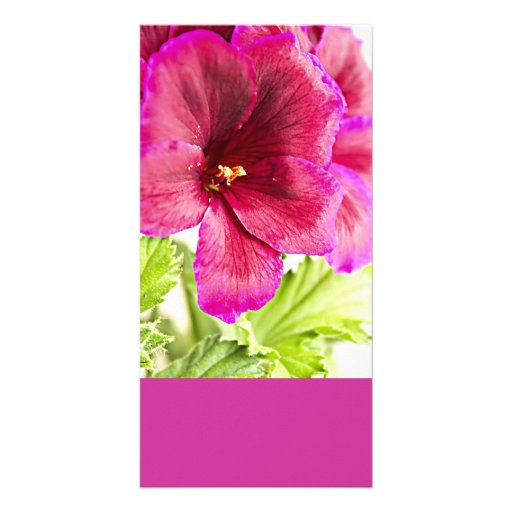 Photocard del centro que cultiva un huerto o de la tarjeta fotografica personalizada