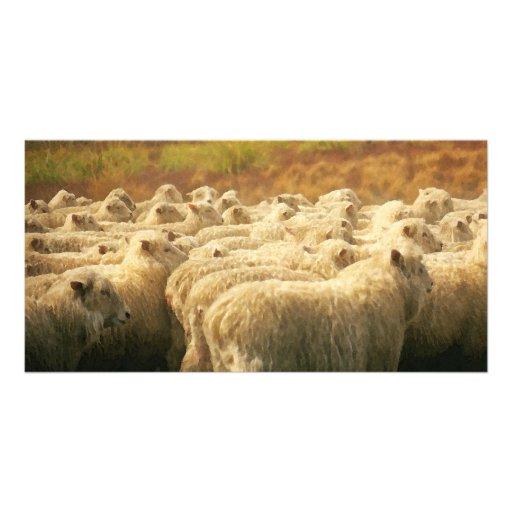 Photocard del watercolour de las ovejas tarjetas personales con fotos