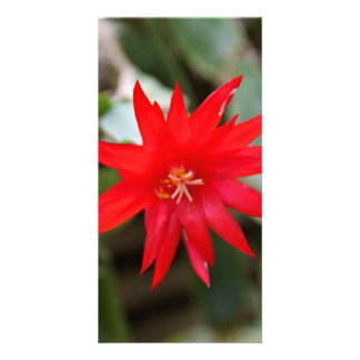 Photocard - Easter Cactus Photo Card