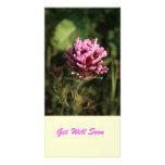 Photocard - Wildflower Tarjetas Fotograficas