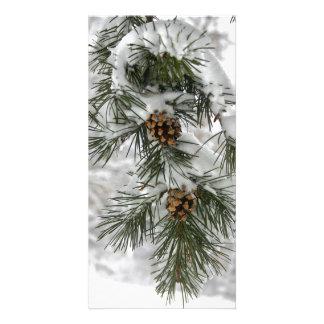 Photocard - Winter Pine Cones & Snow Custom Photo Card