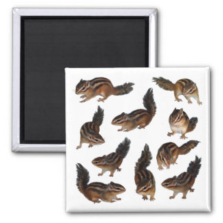 Photograph (31) of sima lith 2 inch square magnet