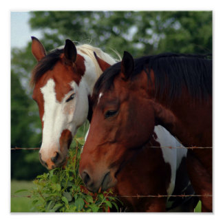 Photograph Horse Posters