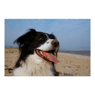 Photograph of a happy dog at the beach poster