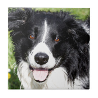 Photograph of a happy dog ceramic tile