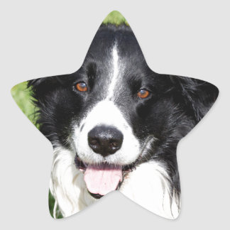 Photograph of a happy dog star sticker