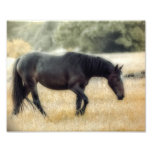 Photograph of a horse with soft focus