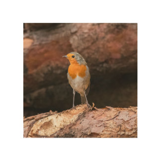 Photograph of a robin sitting on logs wood wall art
