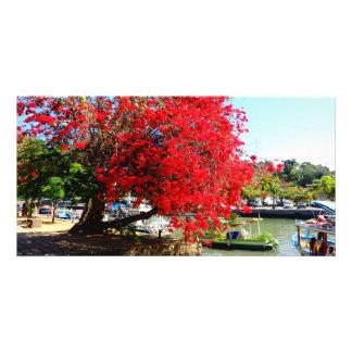 Photograph of bougainville in Paraty, RIO DE JANEI Card