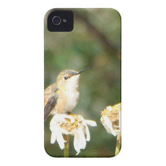 Photograph of Hummingbird Resting on Shasta Daisy iPhone 4 Cover