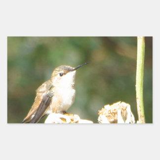 Photograph of Hummingbird Resting on Shasta Daisy Rectangular Sticker