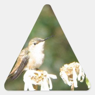 Photograph of Hummingbird Resting on Shasta Daisy Triangle Sticker