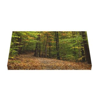 Photograph of path in autumn woods