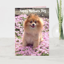 Photograph Pink Pomeranian Happy Mothers Day Card
