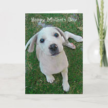 photograph white puppy dog Happy Mothers Day Card