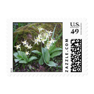Photographed spring flowers postage stamp