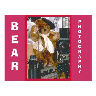 Photographer Bear Postcard