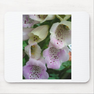 Photographic close-up of a foxglove mouse pad