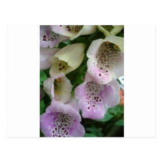 Photographic close-up of a foxglove postcard