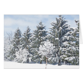 PHOTOGRAPHIC GREETING CARD/EVERGREENS IN SNOW CARD