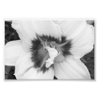 Photographic Print Lily