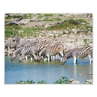 Photographic Print Zebras Photo Print