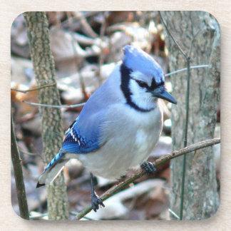 Photographs : birds - beverage coasters