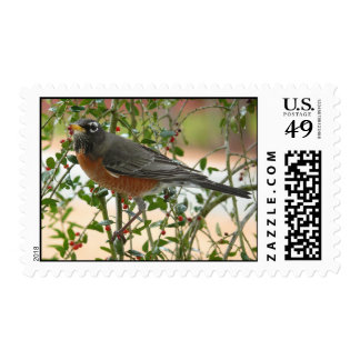 Photographs : birds - postage