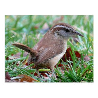 Photographs : birds - postcard