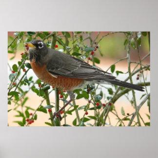 Photographs : birds - print