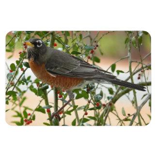 Photographs : birds - rectangular photo magnet
