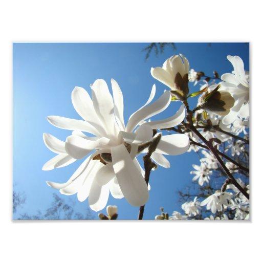Photography art prints Blue Sky Magnolia Flowers Photograph