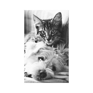 Photography Best of Friends Canvas Print