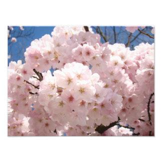 Photography Fine Art Prints Pink Tree Blossoms Photo Print