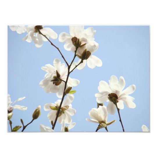 Photography Floral art prints Magnolia Flowers