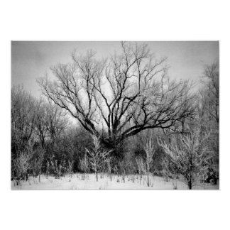 Photography for SALE - Frosted Trees Print