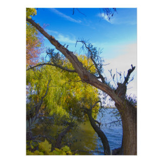 Photography for SALE - Gnarled Tree Prints Poster