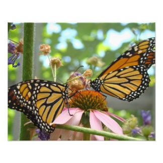 Photography Nature art prints Monarch Butterflies Photograph