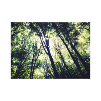 Photography OF A forrest Canvas Print