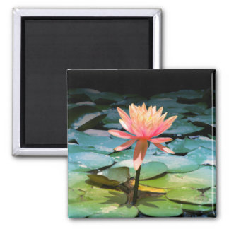 Photography of Flower of Loto 2 Inch Square Magnet