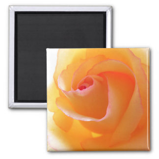 Photography of yellow Rose 2 Inch Square Magnet