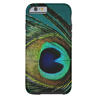 Photography Peacock Feather iPhone 5 CaseMate iPhone 6 Case