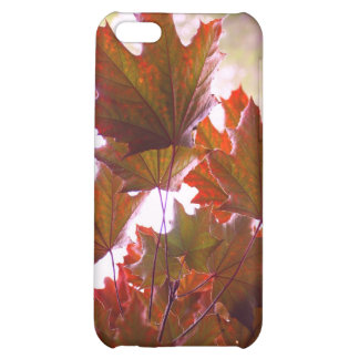 Photography Red Maple Leaves  iPhone 5C Cases