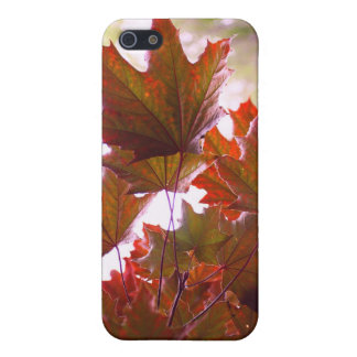 Photography Red Maple Leaves  iPhone 5 Covers